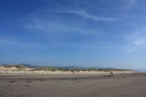 shell-island-dunes_l
