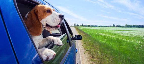 pet-travel-dog-in-car
